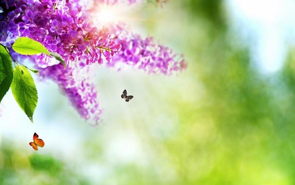 Фото обои бабочки, цветы, природа, весна