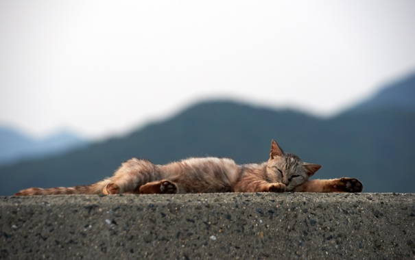 кот и бетон