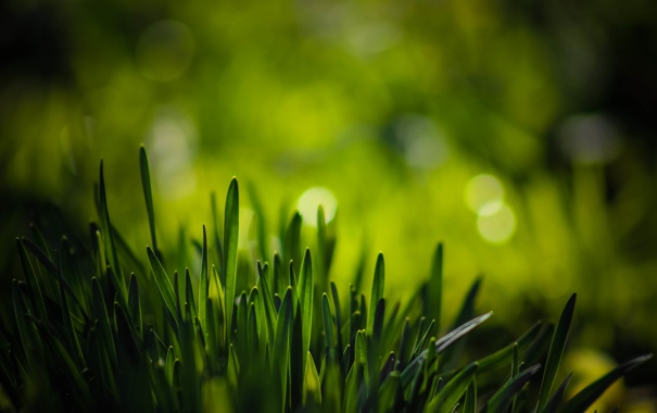 Фото обои зелень, трава, макро, боке