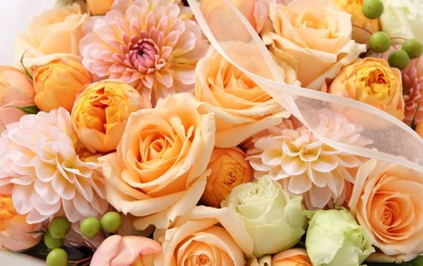 Фото обои цветы, розы, хризантемы, ленточка
