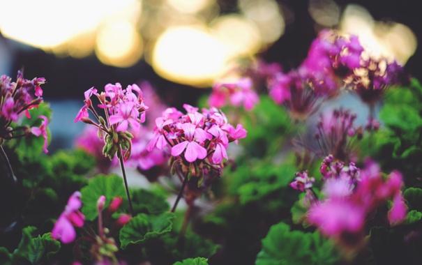 Фото обои листья, цветы, лепестки