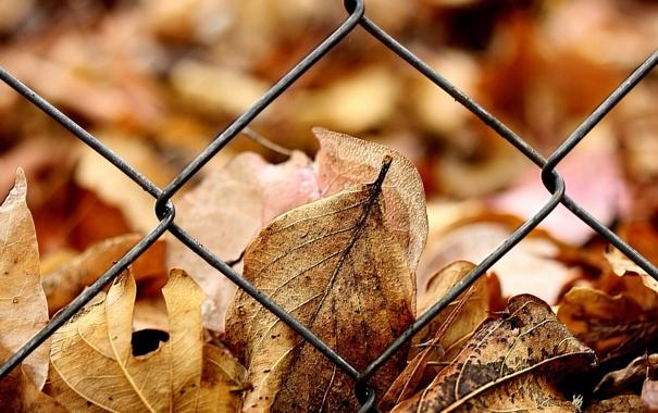 Фото обои осень, листья, забор, желтые, решетка