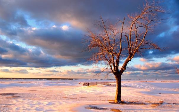 Фото обои зима, море, небо, вода, снег, деревья, фото