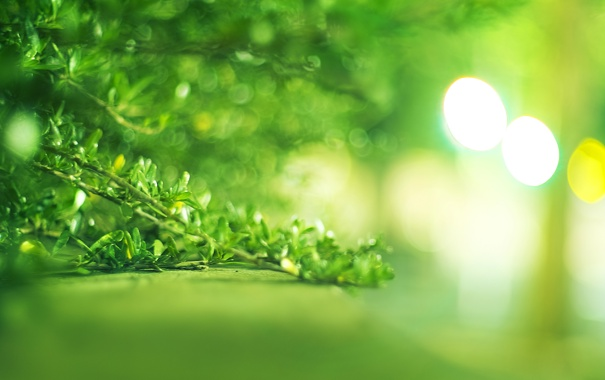 Фото обои зелень, листья, куст, ярко