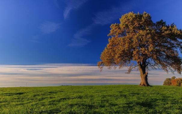 Фото обои поле, осень, небо, трава, облака, дерево
