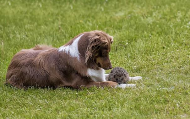 Фото обои природа, собака