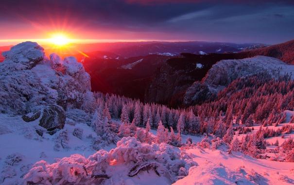 Фото обои зима, лес, небо, солнце, лучи, снег, деревья