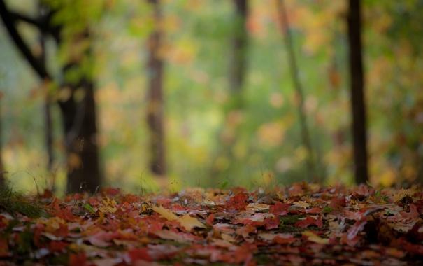 Фото обои осень, лес, макро, листва