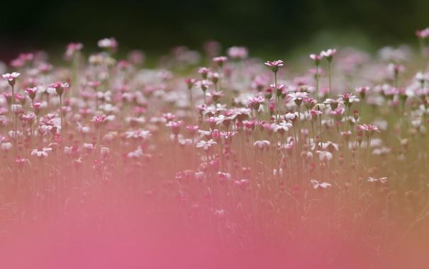 Фото обои лето, цветы, природа, фон
