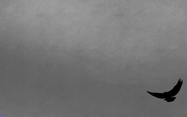 Фото обои серый, фон, минимализм, Ворон, reve
