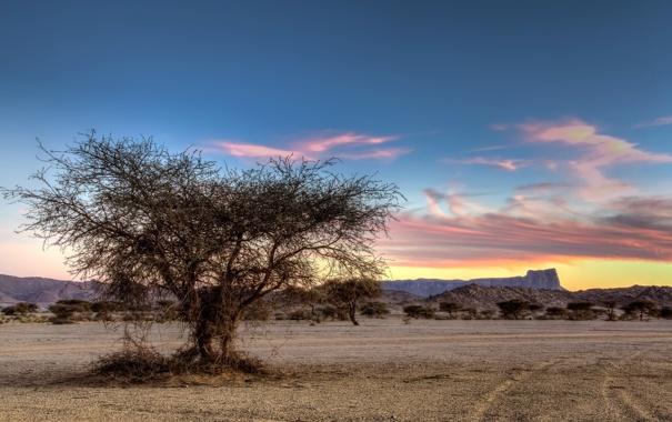 Фото обои поле, пейзаж, дерево