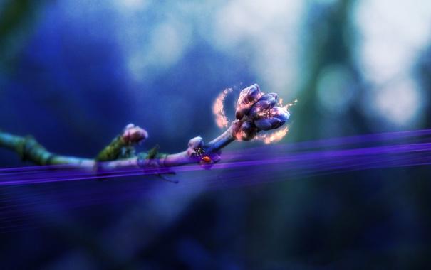 Фото обои цвета, макро, растение, обработка, ветка, картинка