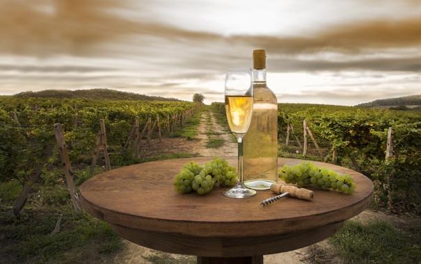 Фото обои пейзаж, виноград, виноградник, тропинка, штопор, вино, столик