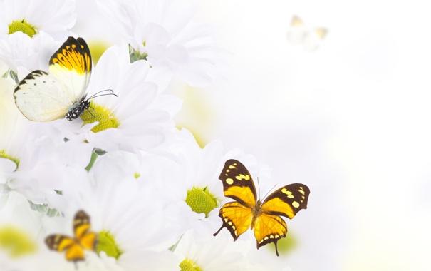 Фото обои бабочки, цветы, flowers, листики, leaves, веточки, butterflies