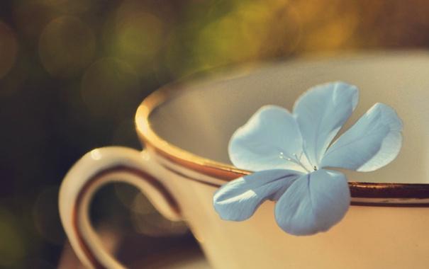 Фото обои цветок, лепестки, голубые, кружка, боке