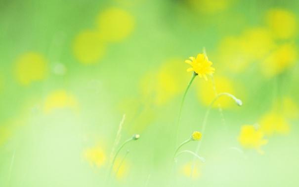 Фото обои макро, цветы, легкость, растения, весна, желтые, размытость