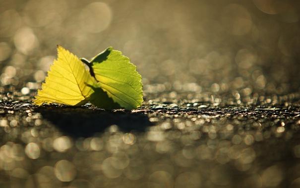 Фото обои листья, свет, камни, листок, листки, листики, камешки