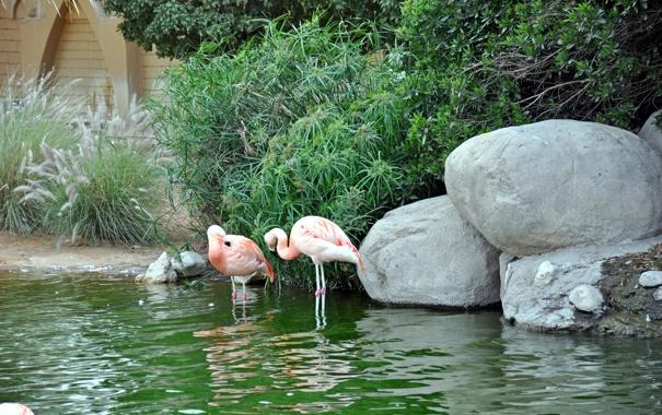 Фото обои животные, вода, птицы, пруд, розовый, вид, камыш