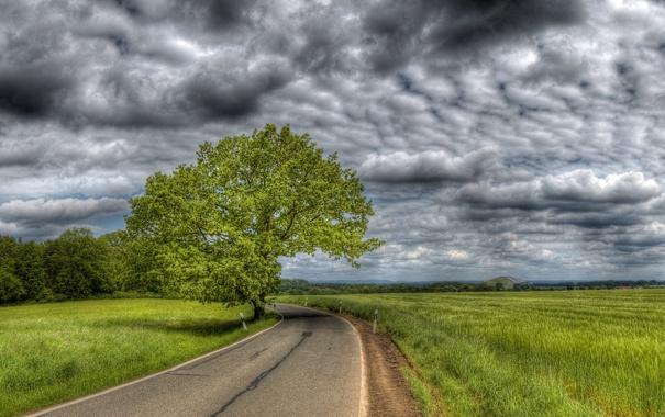 Фото обои дорога, поле, небо, деревья, тучи