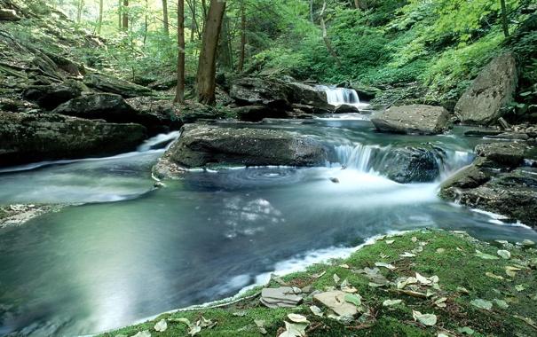 Фото обои лес, река, камни, водопад, Природа