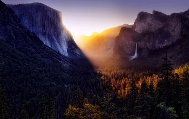 Фото обои forest, trees, mountains, rays of Sun