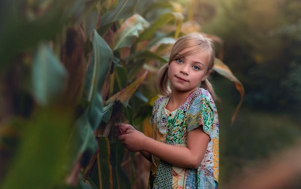 Фото обои девочка, прелесть, боке, Lorna Oxenham, In the corn