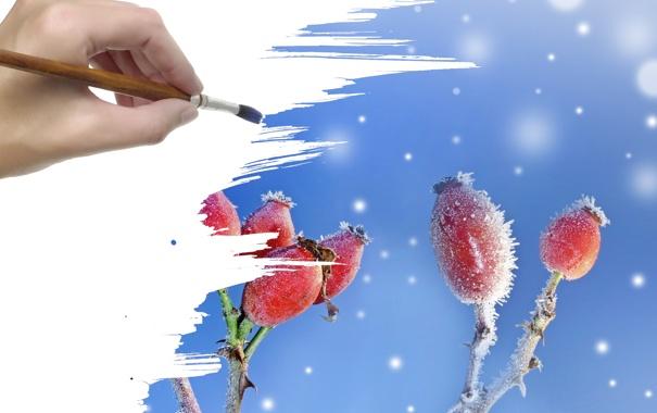 Фото обои иней, снег, ягоды, рука, кисть