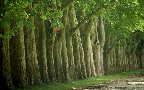 Фото обои зелень, деревья, природа, фото, дерево, красота, леса