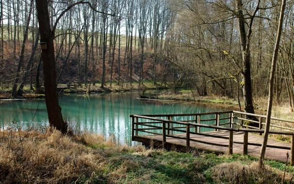 Фото обои озеро, пруд, скворечник, мостик
