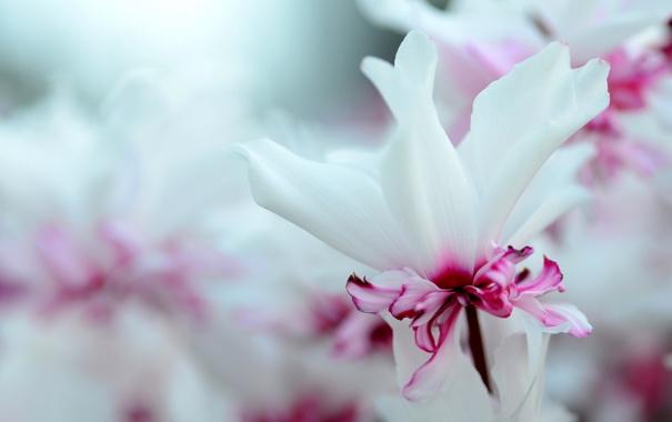 Фото обои макро, природа, лепестки, сад