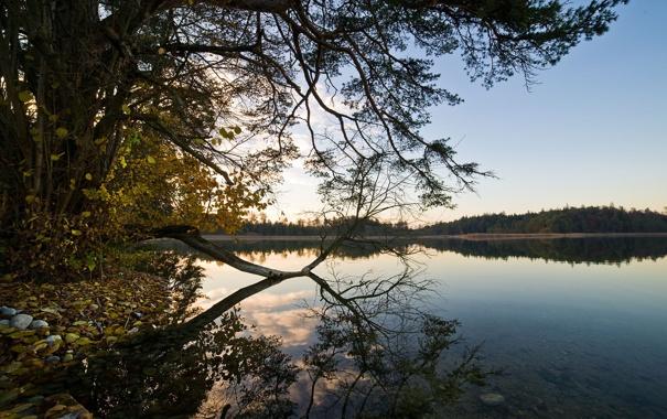 Фото обои лес, небо, вода, деревья, пейзаж, природа, озеро