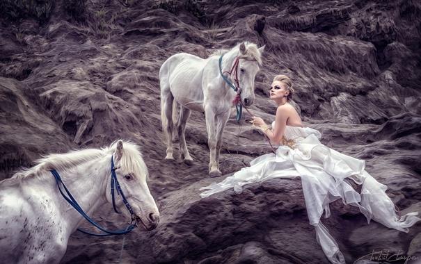 Фото обои девушка, фон, кони
