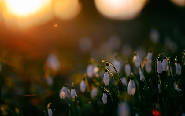 Фото обои природа, закат, цветы