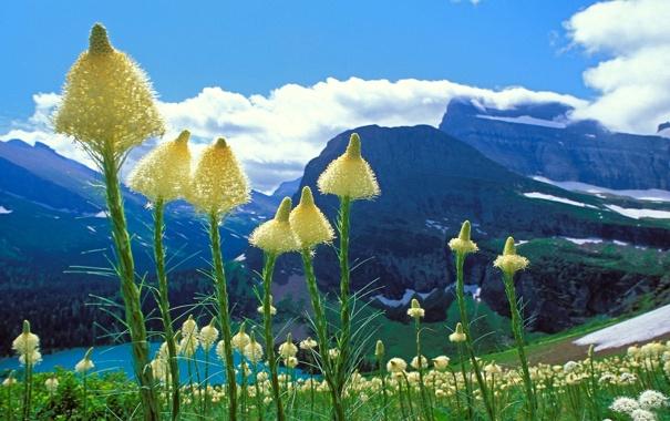 Фото обои небо, облака, цветы, горы, озеро