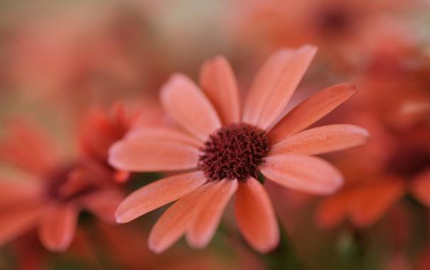 Фото обои цветок, природа, нежный, фокус, полевой