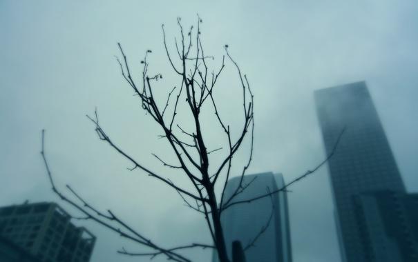 Фото обои город, туман, дерево, ветка, небоскребы