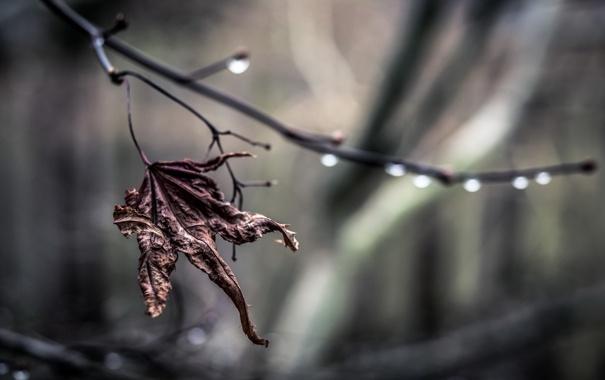 Фото обои капли, природа, лист, ветка