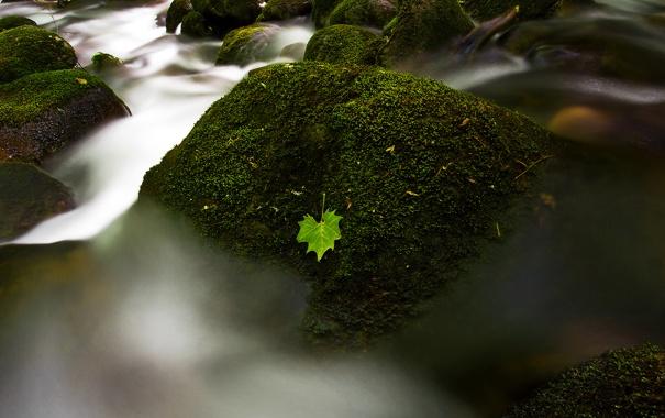 Фото обои вода, река, камни, листок, мох