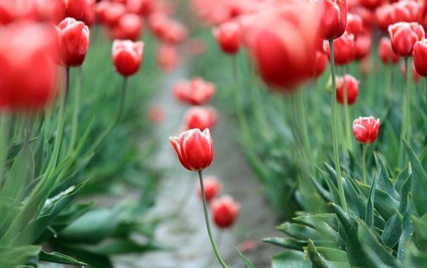 Фото обои поле, листья, цветы, красный, фон, widescreen, обои