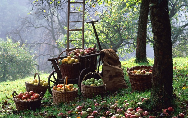 Фото обои урожай, Яблоки, корзины