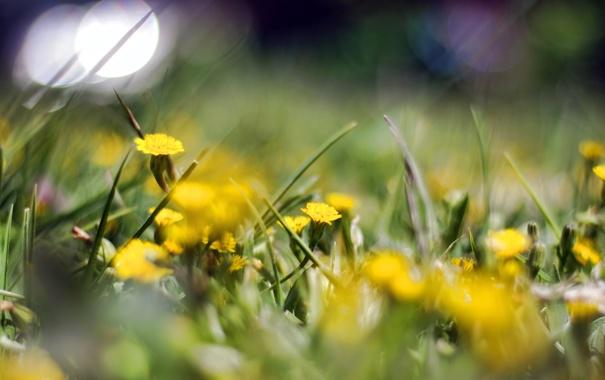 Фото обои цветы, природа, фон, обои, поляна, растения, размытость