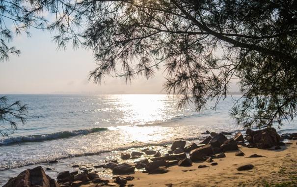 Фото обои песок, море, пляж, ветки, камни