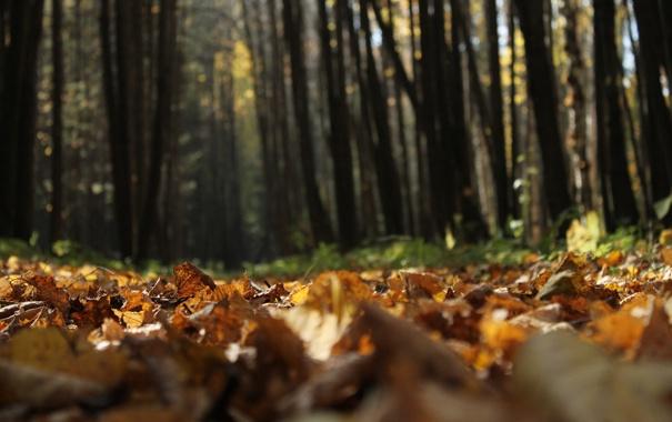 Фото обои осень, листья, деревья, природа