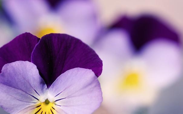 Фото обои цветы, макро фотографии, сады, красивые обои для рабочего стола, бесплатные картинки