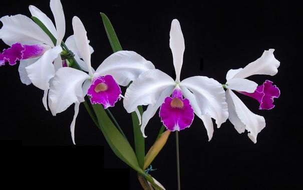 Фото обои природа, растение, лепестки, экзотика