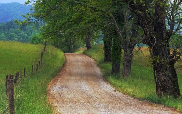 Фото обои леса, трава, фото, widescreen wallpapers 1920x1200, дерево, красивые обои для рабочего стола, деревья