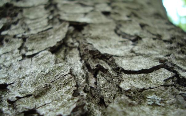 Фото обои природа, Кора, дерево