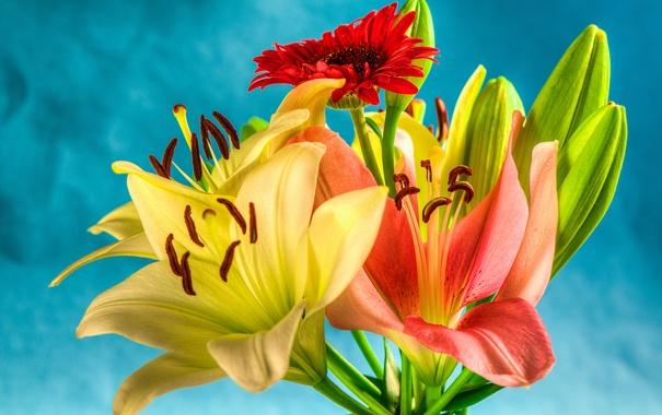 Фото обои природа, лилия, букет, лепестки