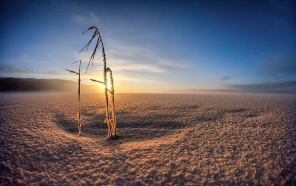 Фото обои зима, поле, свет, утро