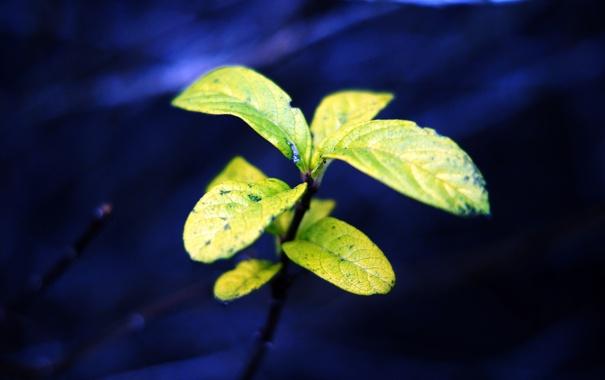 Фото обои зелень, природа, растение, листочки, синий фон